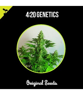 Eleven Seeds Critical Mars Auto (2 Uds)