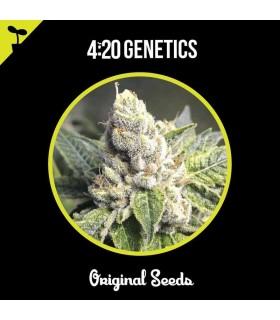Pyramid Seed Super Og Kush Auto (1Ud)