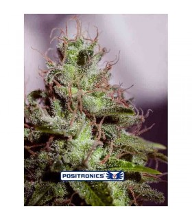 Bi Grow Mix 50 Lt Atami