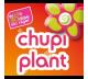 Chupiplant