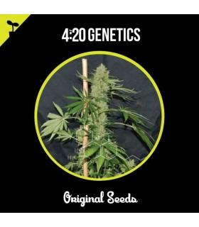 Eleven Seeds Cream Caramel Planet Auto (2 Uds)