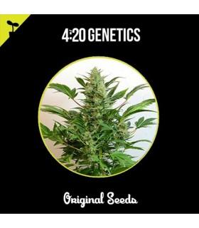 Eleven Seeds Northen Light Auto (2 Uds)