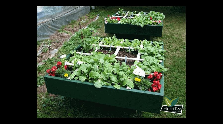 Vegetales que crecen a la sombra